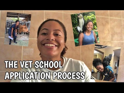 applying-to-vet-school:-everything-you-need-to-know