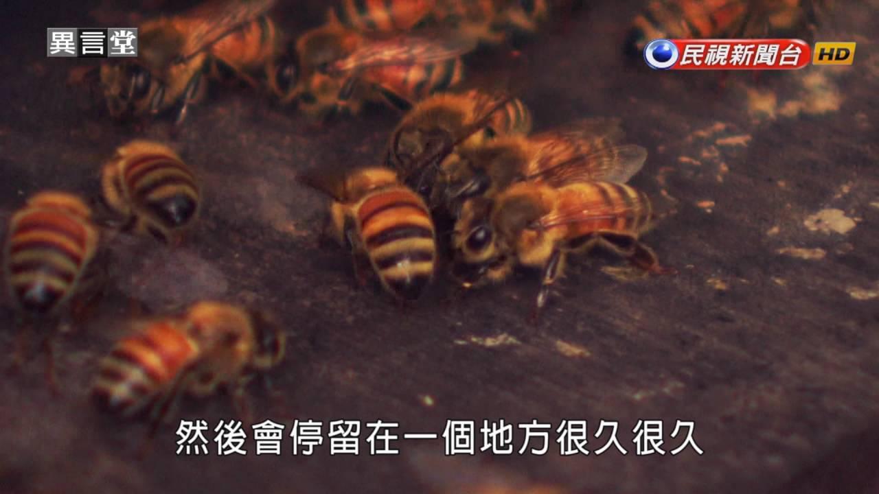 2016.09.03【民視異言堂】蜜蜂消失事件簿 - YouTube