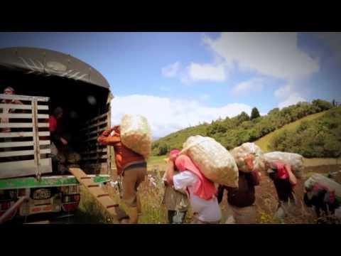 Resumen de la reforma de regalías en Colombia