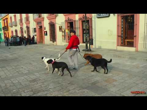Mexico, Visiting Oaxaca City - Maya Trip ep 32 - Travel vlog calatorii tourism