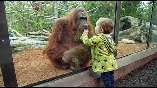 Дети и дикие животные - настоящее зоо видео животных  Подборка