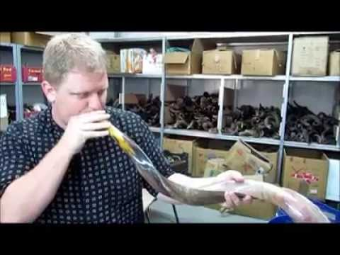 Picking Out A Good Shofar When You Come To Israel With Zev Sigulim