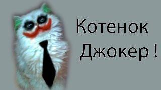 Котенок Джокер !