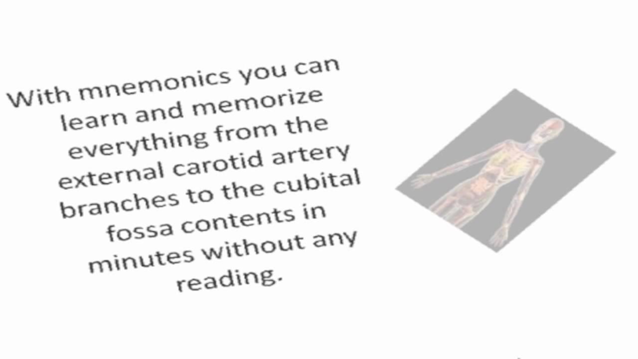Human Anatomy Anatomy Study Guide Youtube