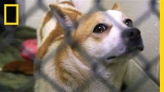 Pups Rescued From Dog Meat Farm Need Adoption