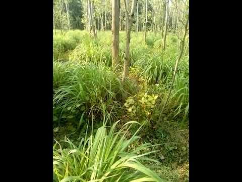 Contract farming of moringa(13)