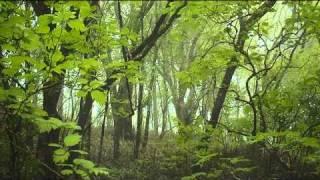 Kabana - Serenity [H.D]