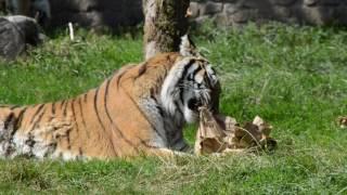 Dartmoor Zoo - Outreach Video