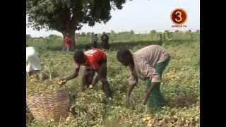 AFRICA TV 3 - NA DUKE (NOMA TUMATUR) HAUSA