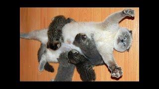 Кошки со своими котятами веселая подборка