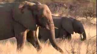 Namibie : Parc Etosha