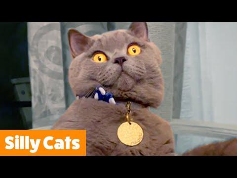 Funniest Cat Bloopers   Funny Pet Videos