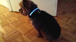 Led Light Flashing Pet Dog Safety Collar