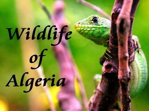Wildlife of Algeria