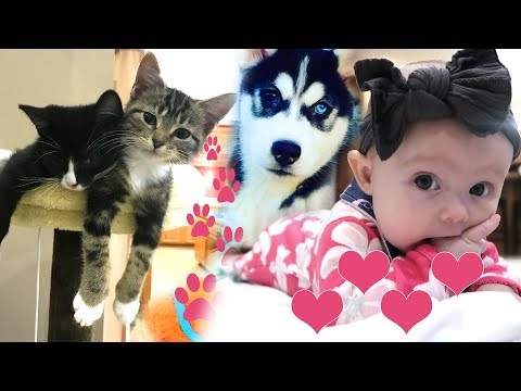 Thumbnail: Kittens, Puppies and Cute Baby
