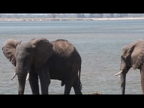 Is it too late? Hong Kong bans ivory trade
