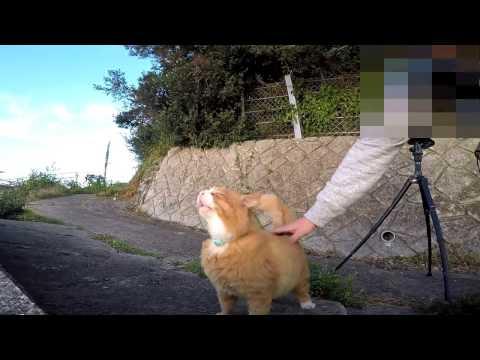 腰トントンが気持ち良すぎる猫