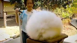Record Breaking Rabbits: Angora Bunnies Get Blow-Dried