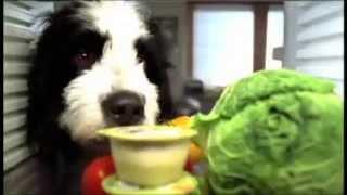 "KIA cee'd ""dog"" TVC Thumbnail"