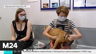 Любители кошек рассказали о правилах посещения ветеринаров - Москва 24