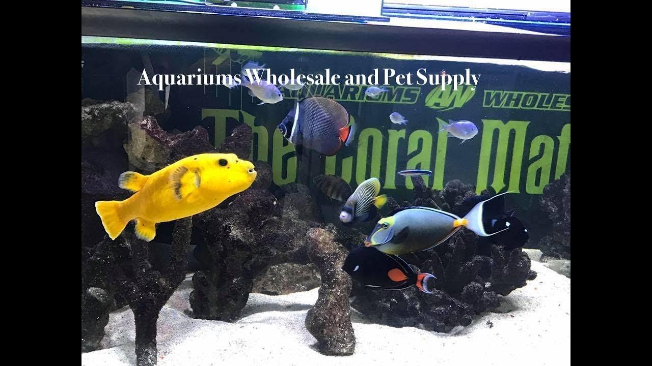 Fish Store Tour - Aquariums Wholesale and Pet Supply
