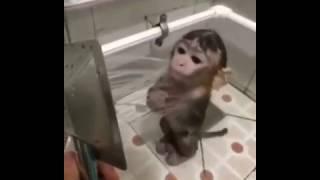 Video Lucu Anak Monyet Lucu Dimandiin Pakai Shower
