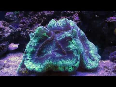 Brain Coral Time Lapse