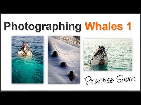 Photography Tips for Whale Watching Pt1 - Photo opportunity of a lifetime