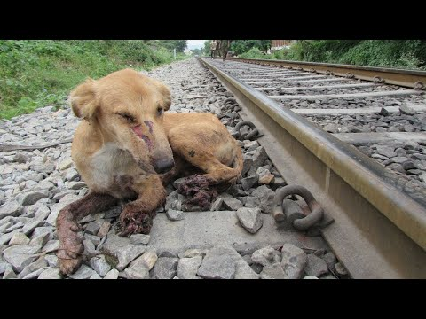 Dog's legs crushed in train accident but not his spirit