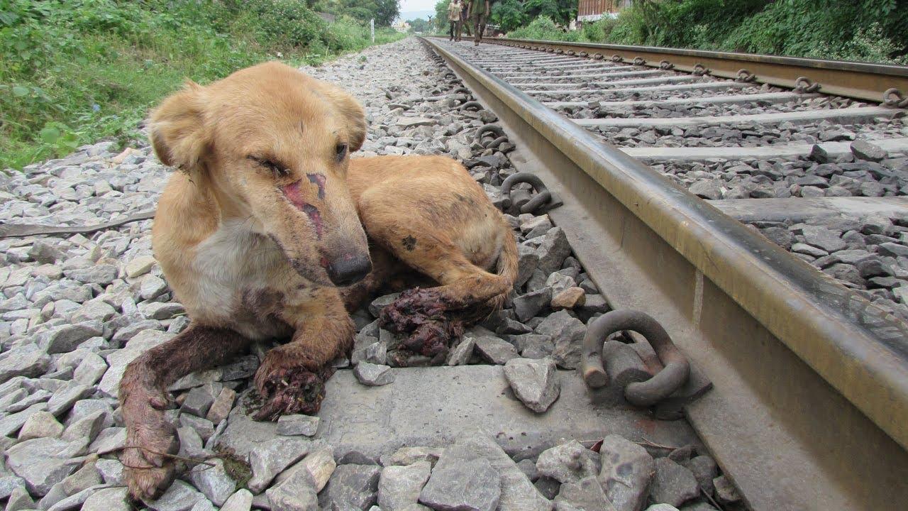 VIDEO: Πήγε τον σκύλο του σε γραμμές τρένου για να τον σκοτώσει!!!
