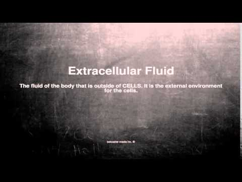Medical vocabulary: What does Extracellular Fluid mean