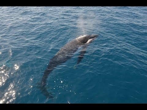 Epic whale watching adventure, St Lawrence River, Rivière du Loup, Atlantic Ocean