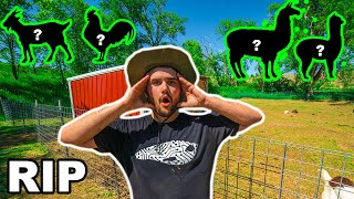 My BACKYARD FARM Animal is DEAD!!! (I Caught the Killer)