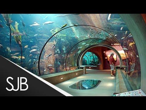 malta national aquarium glass tunnel malta 2014