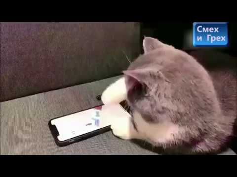 Кошка играет в смартфон