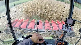 Cab View | Claas Lexion 570 + Capello Diamant 8 Rows | Mais Harvest