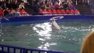 Шоу черноморских дельфинов. Часть 1.