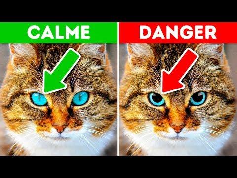 12 Signes Qui Montrent Que Ton Animal a Besoin D'aide