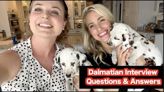 Mother_of_Dalmatians_ and Doctor Lindsay Interview   Should YOU OWN a Dalmatian?