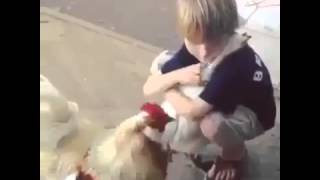 amour entre enfant et poule