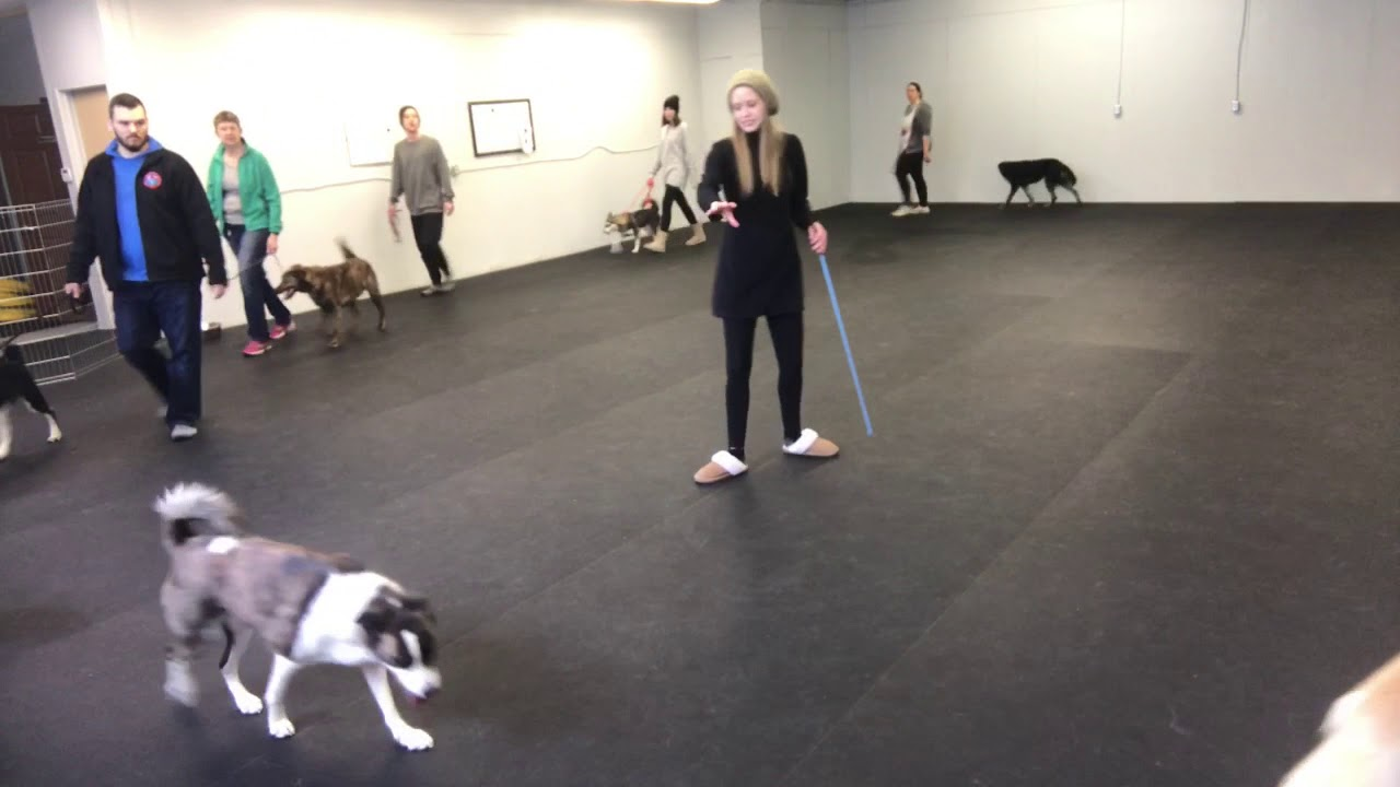 3 Best Dog Trainers in Regina, SK - ThreeBestRated