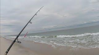 BONITO and lots of SHAD - Surf Fishing the South Shore - Long Island NY