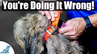 The BIG MISTAKE That People Make When Fitting A Dog Collar