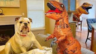 Cute BULLDOG PRANKED with TREX DINOSAUR SUIT COSTUME! FUNNY DOG REACTS to TREX!