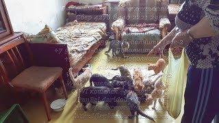 Кошек спасают малоимущие пенсионеры России   Pensioners save homeless cats 