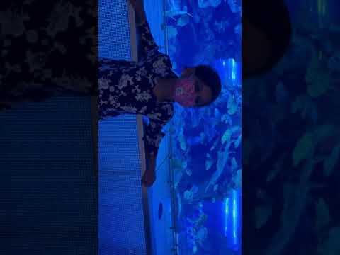 Dubai mall world biggest Aquarium
