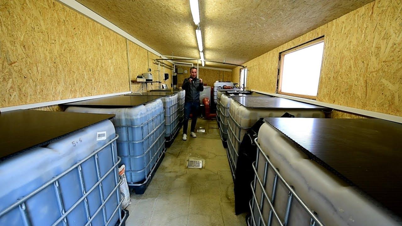 Modern koi blog 2410 trommelfilter mit liter i for Modern koi blog