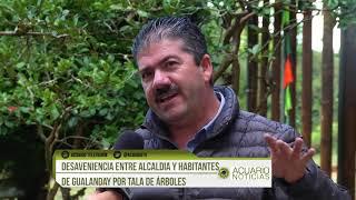 Desavenencias  entre Alcaldía  y  propietarios de Gualanday por tala de árboles