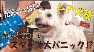 番組提供:ペットライン株式会社 http://www.petline.co.jp/ 今回は人気企画!タスク14!!! 【はなせ】の回になります♪ 遊びに来てくれたのは...