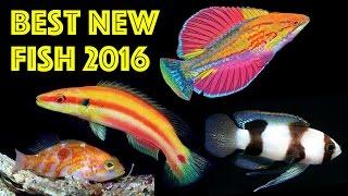 Top 10 Best NEW Aquarium Fish Species of 2016!
